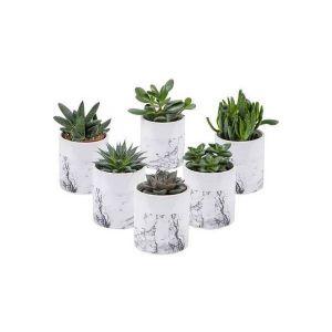 Mix Plantes grasses 9 cm dans un ceramique cilindre avec effet marbre