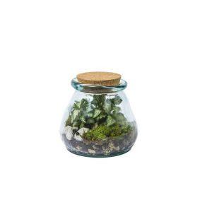 Collection Terrarium - Pot de stockage avec liège. plantes verte, mousse et pierres décorative