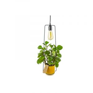 Plantdeco collection - Lamp with ENO pot in yellow including plant, 12 cm