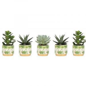 Plantdeco collection  - Assortiment de sanseveria en pot céramique Jungle, 6cm