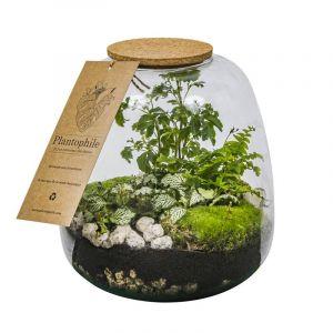 Terrarium collection  - Terrarium semi-autonome, petit modèle