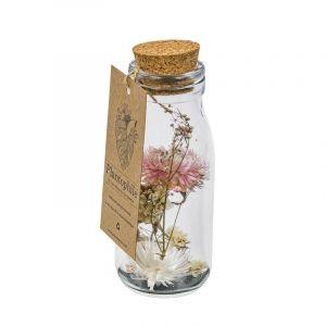Dried flower collection  - Fleurs séchées en bouteille, moyen modèle