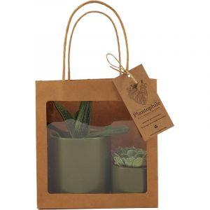 Giftbag collection -  deux plantes grasses en pot vert doré, 6cm et 9cm