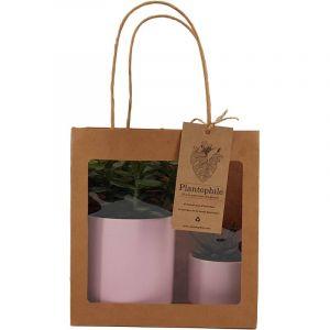 Giftbag collection - deux plantes grasses en pot rose doré, 6cm et 9cm