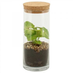 Terarium XS - Syngonium in glass tube diam. 9 cm with cork