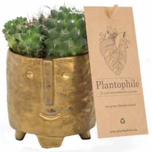 Cactus 6 cm in a golden face pot - Small