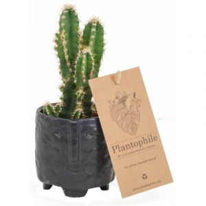 Cactus 6 cm in a black face pot - Small