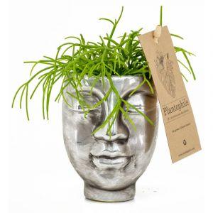 Succulentes dans un pot visage métal argenté de 6 cm à 2 faces - Petit