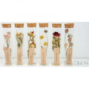 Collect all - dried flowers in a tube (5 variations)