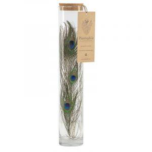 Vase haut avec des plumes de paon (bouchon liège)