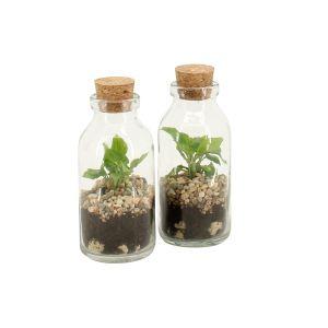 TINIEST terrarium, plante : Spatiphyllum