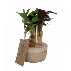 Set of 6 water plants in a wooden foot with LED light