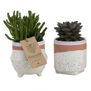 Mix de succulentes 9 cm dans un pot en céramique Optimism, blanc