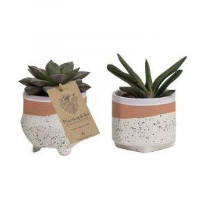 Mix de succulentes 6 cm dans un pot en céramique Optimism, blanc