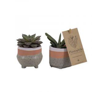Mix de succulentes 6 cm dans un pot en céramique Optimism, gris