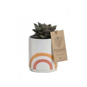 Mix de suculents 9 cm dans un pot en céramique arc en ciel, orange