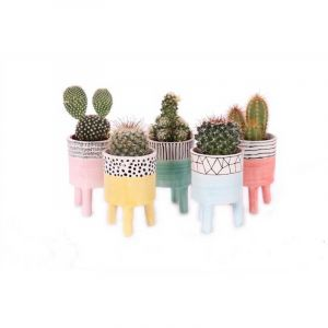 Cactus mix 6 cm in ceramic Willemstad pot