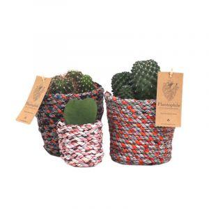 Mélange de succulentes dans des paniers de 6 cm fabriqués à partir de tissus recyclés