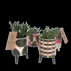 Succulents pot ceramic Elma medium