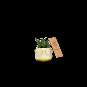 Succulents 6 cm en ceramique Renate