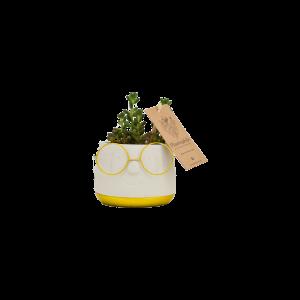 Succulents 8,5 cm en ceramique Renate