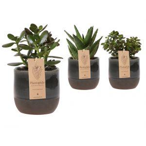 Succulents 9 cm en ceramique Urban