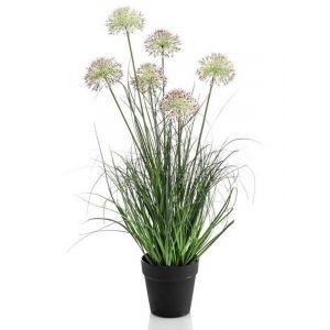 Allium herbe L, pot plastique noir