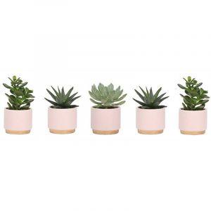 Plantdeco collection - Succulent 6 cm mix dans un pot roze/doré